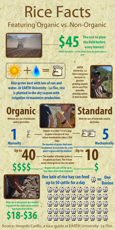 3 Perbedaan Beras Organik Dan Non Organik