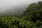 The view of the Pacific side of the Monteverde Cloud Forest Reserve from atop the Continental Divide Sunday, January 4, 2015 in Monteverde, Costa Rica. The cloud forest is home to over 3,000 plant species.