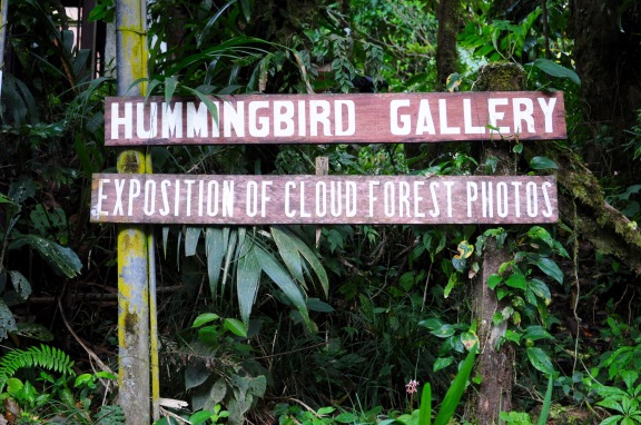 Located right outside the Monteverde Cloud Forest Reserve is another huge tourist attraction, the Hummingbird Gallery. This exhibit was developed 15 years ago. After our hike throughout the cloud forest, our tour guide Esteban Mendez Vargas led us into the exhibit. Photo by McGuire McManus