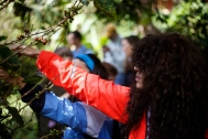 Isabella Alves, MU reporter, tries picking coffee cherries during an experiential tour of Finca La Bella coffee farm, Thursday, January 5, 2017. Visitors had the chance to try on the coffee picking baskets and spend a few minutes picking. Photo by Nadav Soroker.