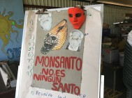 "TRANSLATION: ""Monsanto is not a saint."" Many small-scale farmers in Costa Rica feel negatively about the work that Monsanto has done around the world in regard to agriculture. Photo by Jalyn Henderson Muchos agricultores de pequeña escala en Costa Rica se sienten negativamente hacia el trabajo que Monsanto ha hecho en todo el mundo en lo que respecta a la agricultura. Foto de Jalyn Henderson"